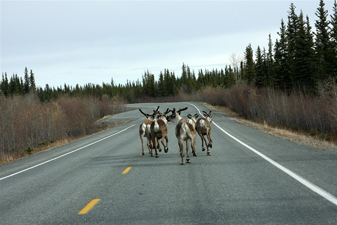 Занимательная Аляска