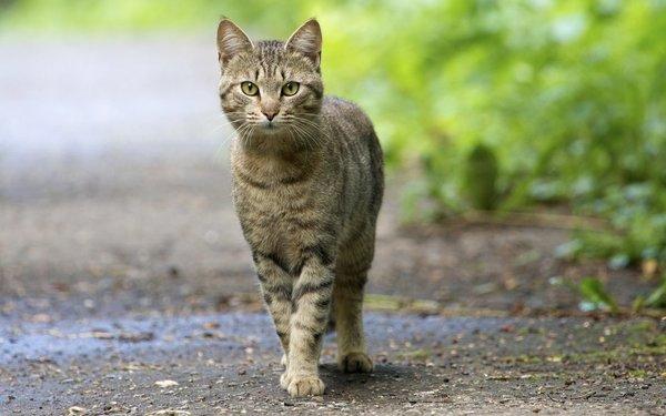 Топ - 5 Самых умных пород кошек!