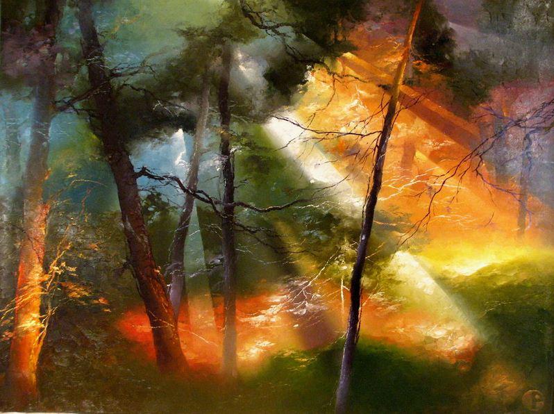 Свет в лесу — завораживающие…