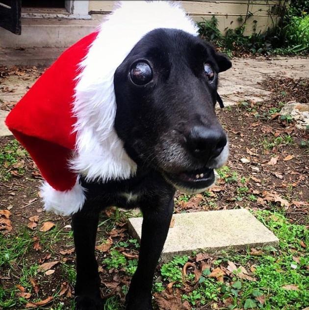 Под Рождество ослепшего и ненужного пса вышвырнули из дома. Но случилось чудо!