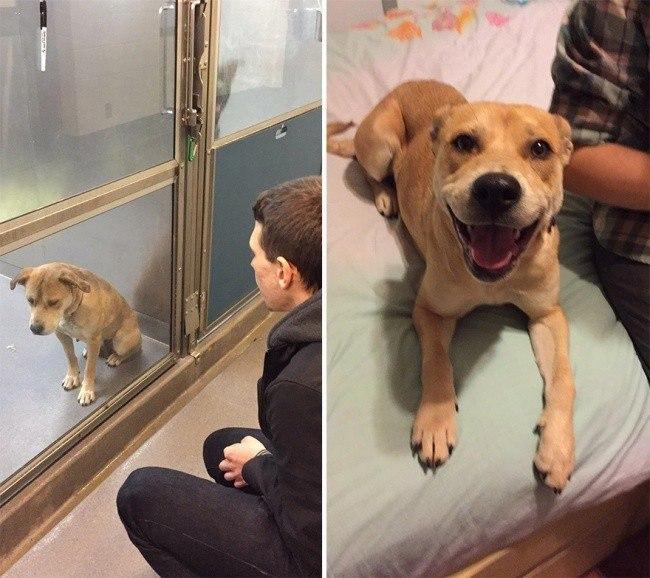 Животные до и после того, как их забрали из приюта