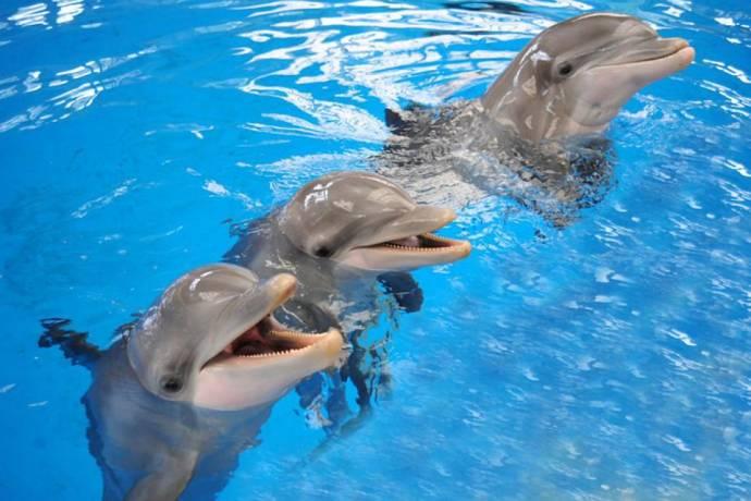 Дельфины дают друг другу дельные советы