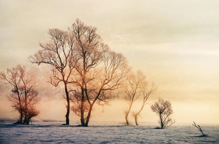 Зима в нежных тонах. Автор: Cornel Pufan.