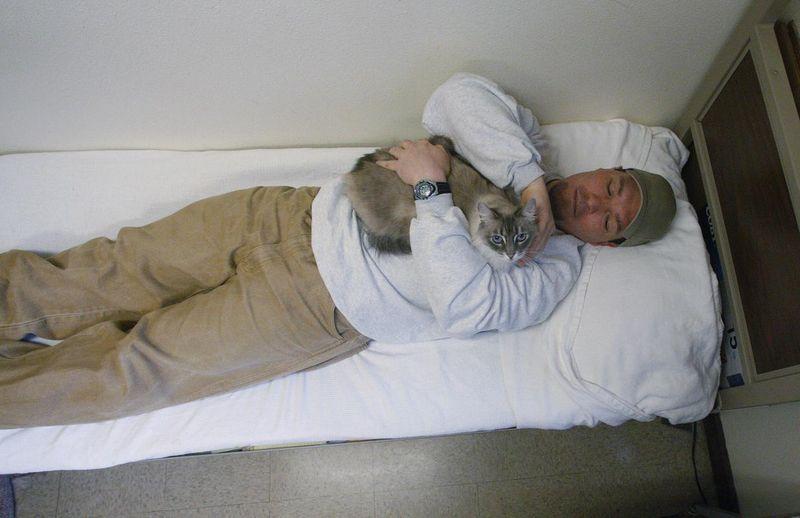 CatsGoldenHearts12 Почему мы любим кошек