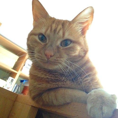 Польза от кота: правда или вымысел!