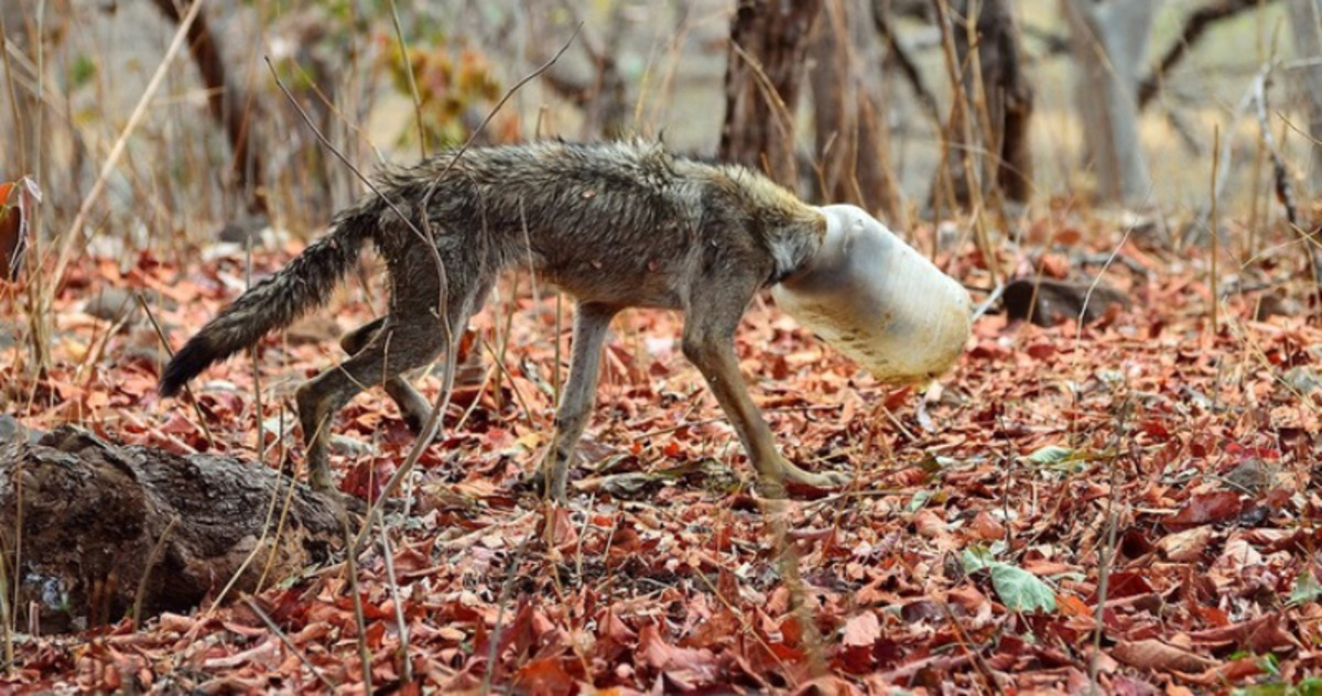 Случайное фото спасло волка …