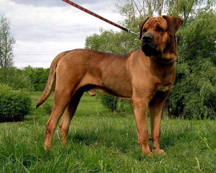 10 самых опасных пород собак