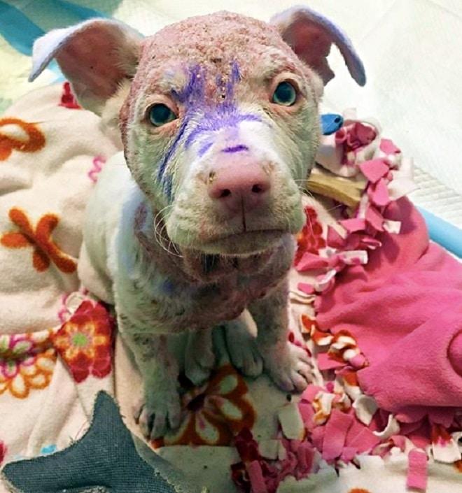 Больной щенок потряс людей, но больше всего вопросов вызвали фиолетовые отметины на его теле