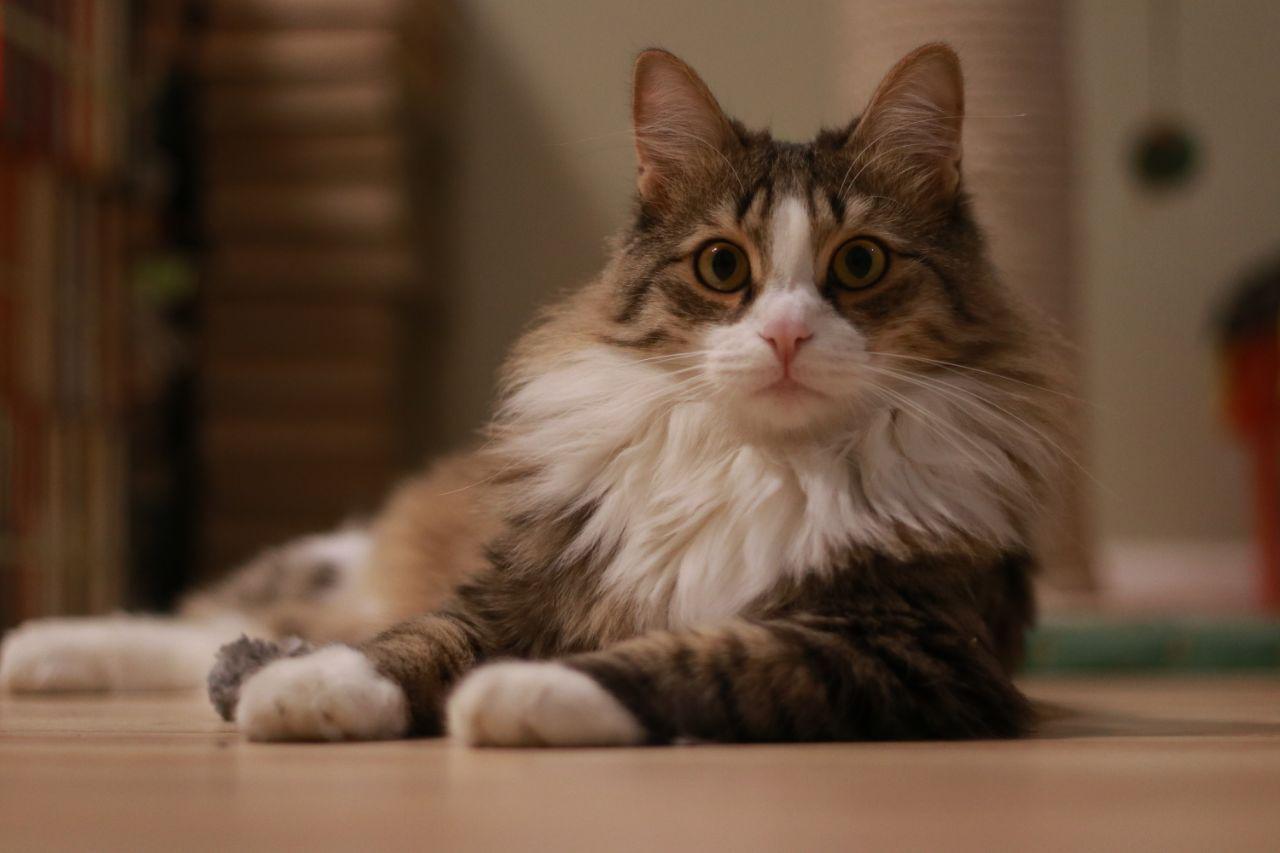 Что значит не хочешь кота? К…