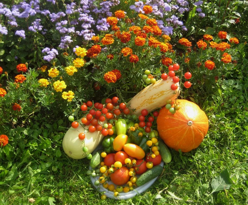 Дары моего огорода