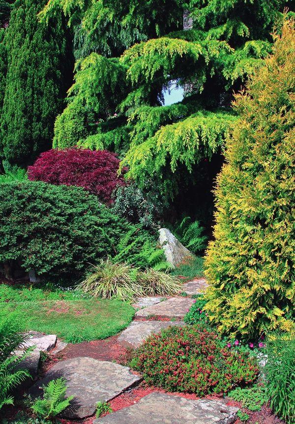 Колючие секреты - создаем на своем участке хвойный сад