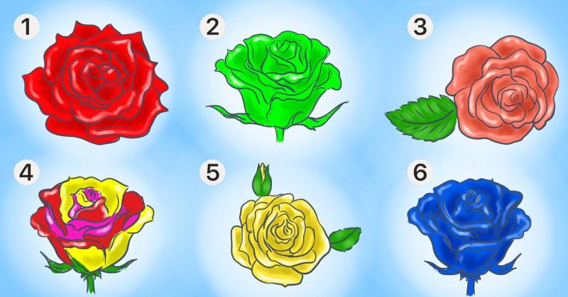 розы виды