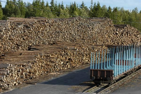 Матвиенко предложила кабмину приостановить экспорт леса до изменения законодательства