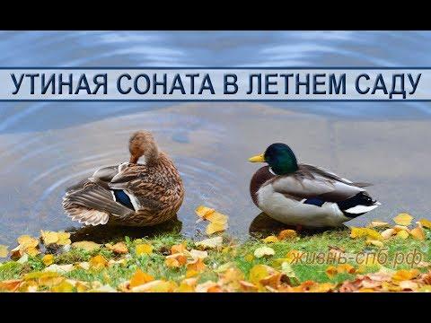 Утиная соната в Летнем саду