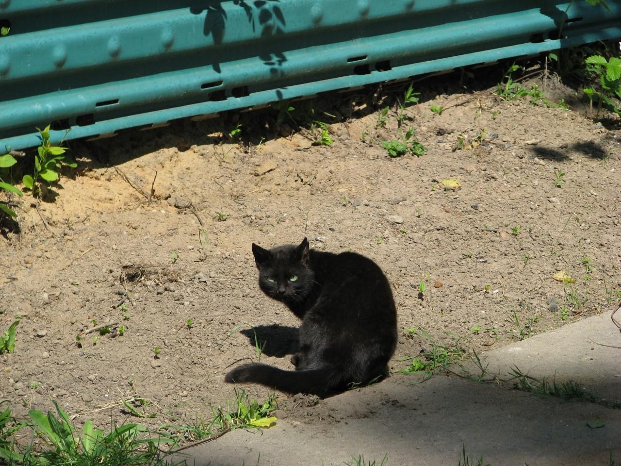 Братья наши меньшие: выходит, кошка знает, чего она хочет