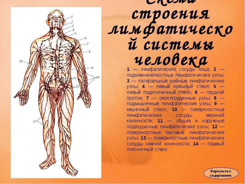 Очищение лимфы: рекомендации Аюрведы