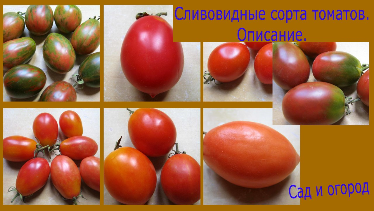 Мои сливовидные сорта томатов.Подробное описание. Подробнее смотрите видео здесь