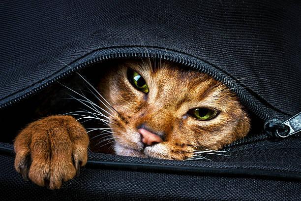 Эй, не надо так! Эти горе-путешественники упаковали свою кошку Худышку самым странным образом