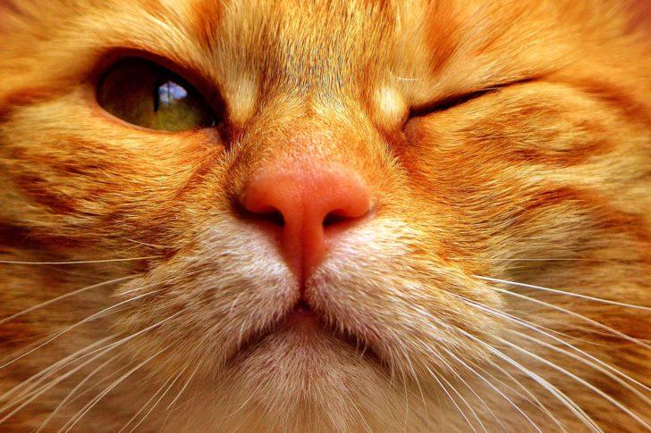 Как кошка устроила мою личную жизнь