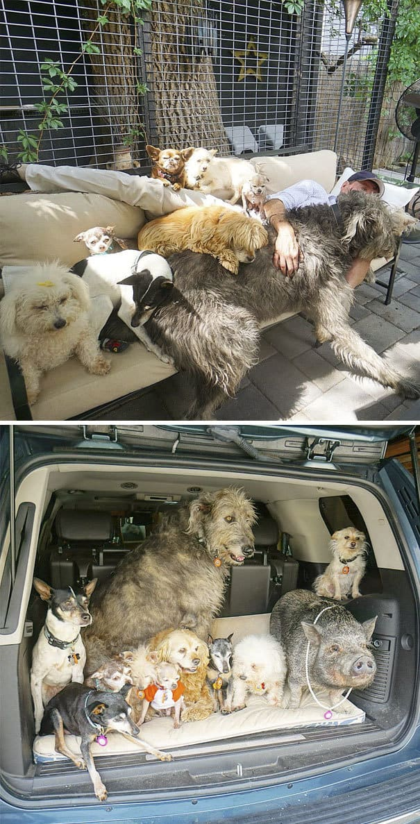 living-with-multiple-pets-250-59c0b66f45e44__605