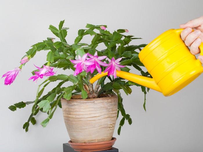 янтарная кислота для полива комнатных растений