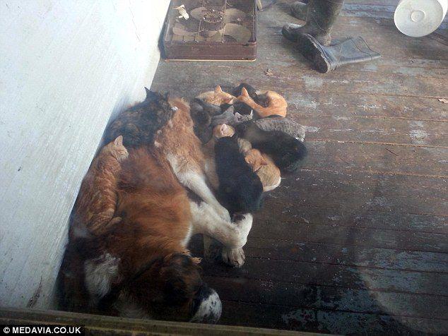 добро, пес коты, приют