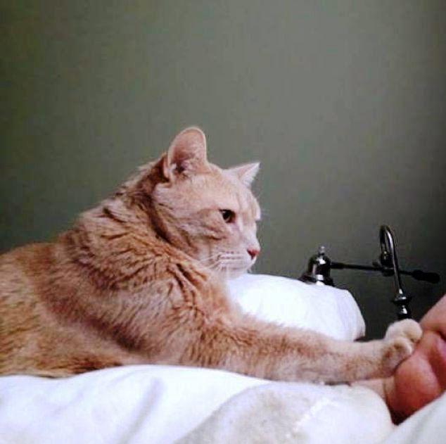 Когда твой кот вместо будиль…