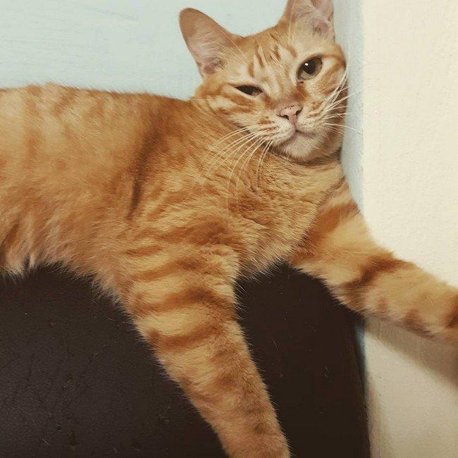 6. Фотографируешь кота каждый раз, когда он делает что-то необычное. Или просто свет красиво упал. Или просто скучно домашний питомец, животные, кот, прикол, юмор