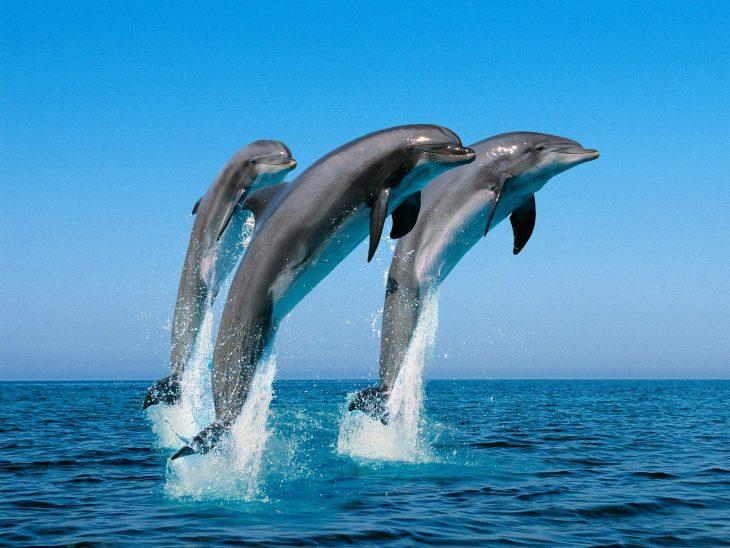 25 курьёзных фактов о дельфинах, животных, которых в Индии признали личностями
