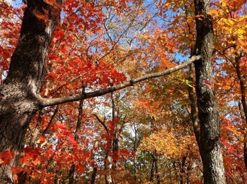 23. Ветка соединяет деревья в интернете, неожиданно, непонятно, подборка, странно, странные фото, фото