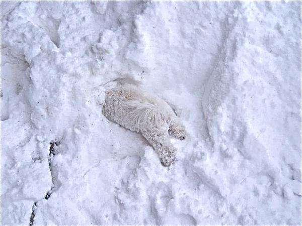 animals-first-time-seeing-snow-11__700