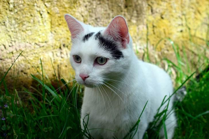 Дед все время гонял этого кота, но тот упорно к нему возвращался, пока не остался насовсем