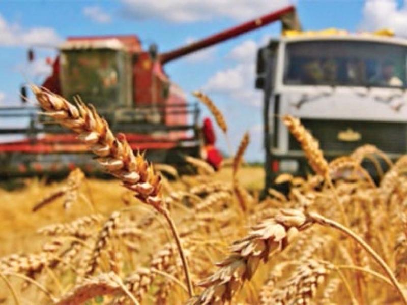 Минсельхоз России: на 28 сентября собрано 98,4 млн тонн зерна