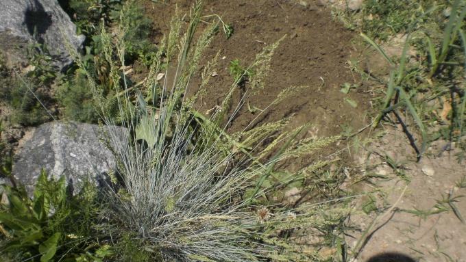Растения для каменистого садика: мои находки и ошибки