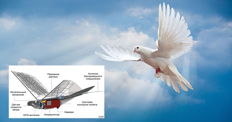 Как устроены китайские дроны, замаскированные под голубей