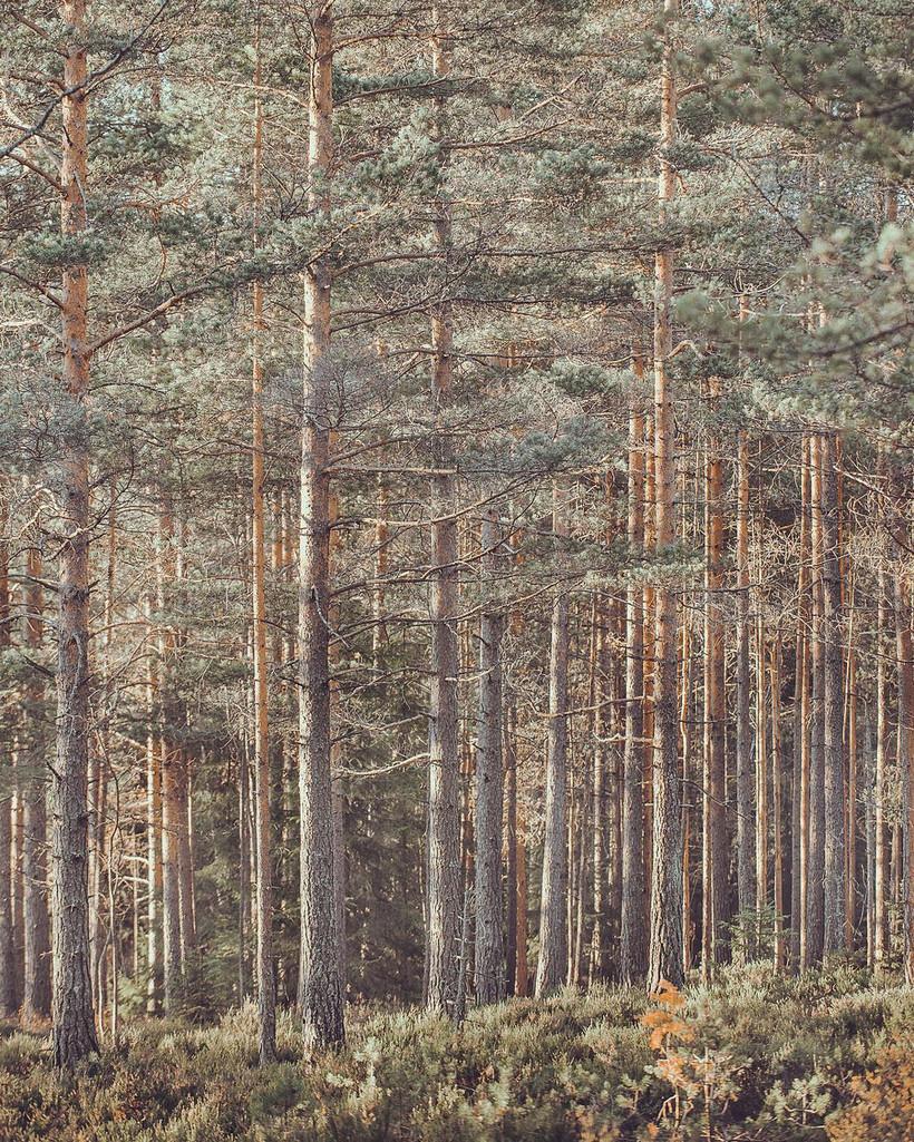 Норвегия и ее тихая красота в магических пейзажных фотографиях