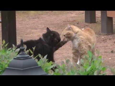 "Коты - ""Джентльмены удачи"""