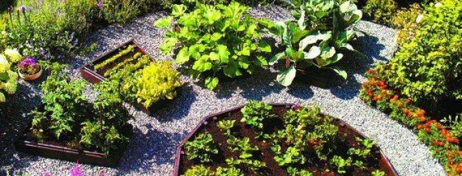 как сделать в огороде красивые грядки