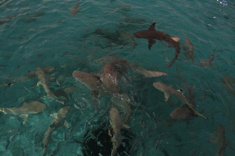 Мальдивы Мальдивы, море, океан, отдых