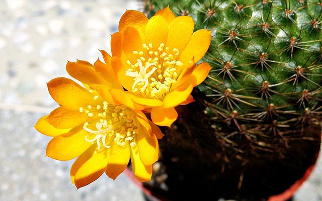 Самый стойкие растения для дома и дачи, не требующие чрезмерного ухода
