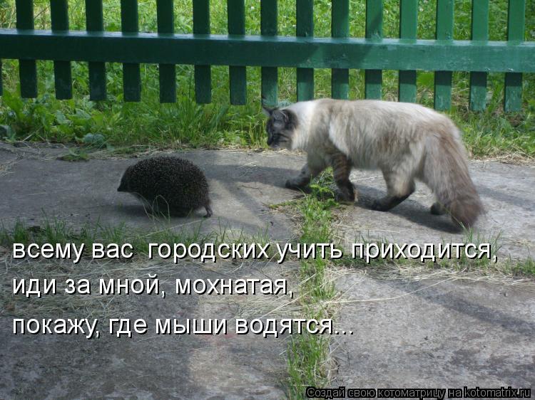 Котоматрица: всему вас  городских учить приходится, иди за мной, мохнатая, покажу, где мыши водятся...