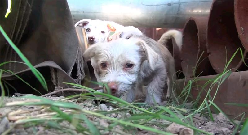 Спасение семейства собак