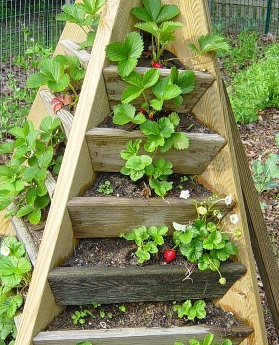 Сад и огород своими руками идеи фото интересный
