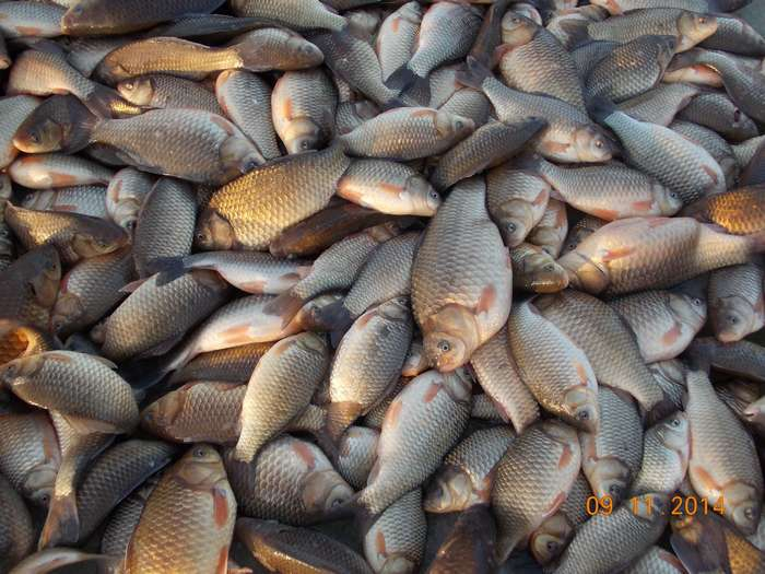 рыбалка на карася бреднем