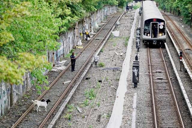 Происшествие в Бруклине: два козлика перекрыли движение железнодорожного транспорта