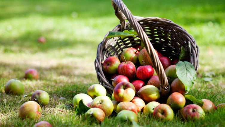 Что можно приготовить из яблок?