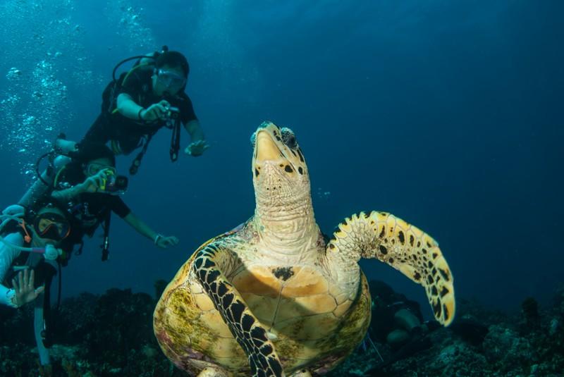 Черепахе сделали титановую челюсть