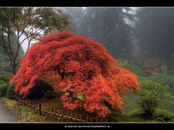 Японский сад — идеи и некоторые рекомендации по его организации на даче
