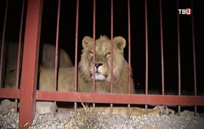 Агрессивные посетители напали на животных в зоопарке Приморья