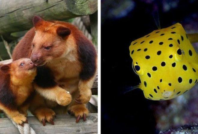 Фото редких животных, доказывающих, что природе есть чем нас удивить